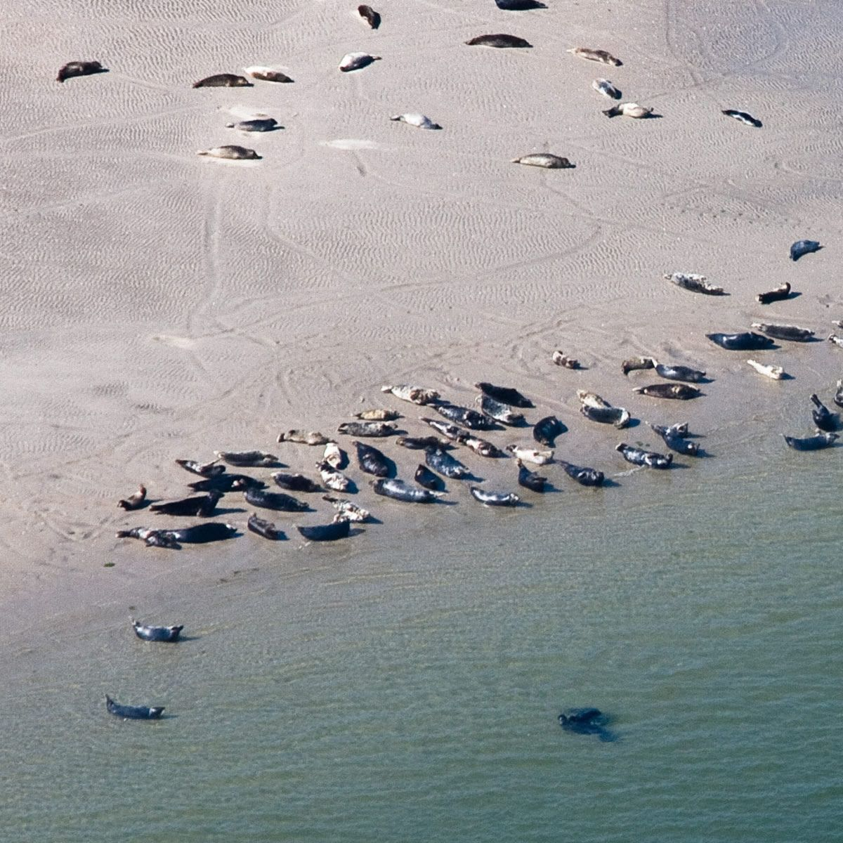 Large groups of Seals